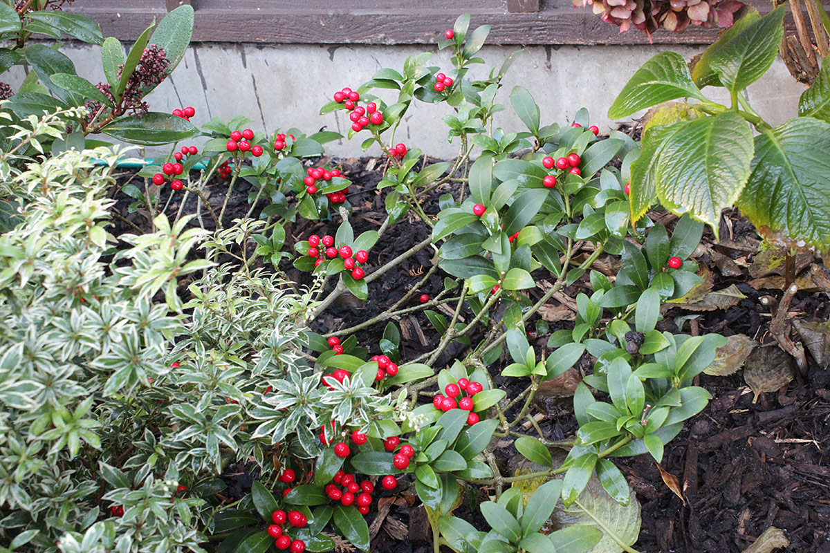 graphicality uk my garden in mid december