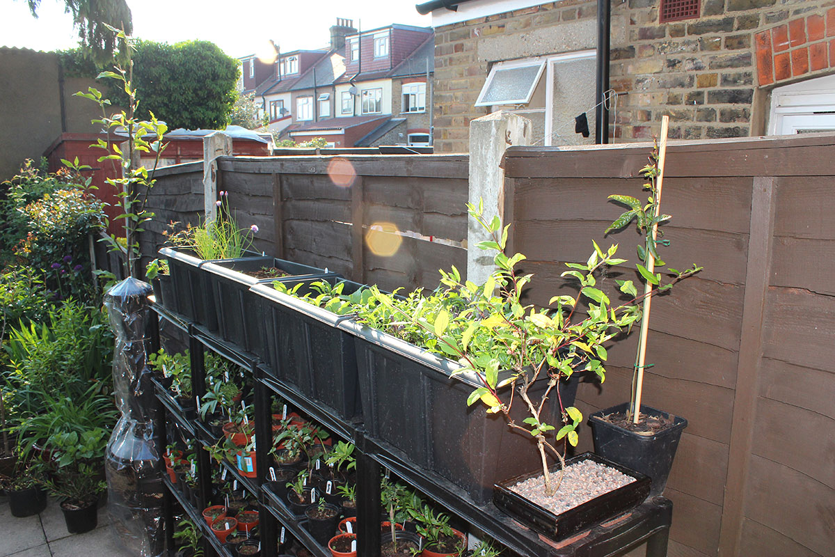 On Top Of The Shelves Is My New Vegetable Garden. I Thought I Would Start A  Bit Modest : ) Well, I Didnu0027t Have Much Choice, This Was The Only Place To  Put ...